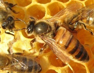 Mated queens