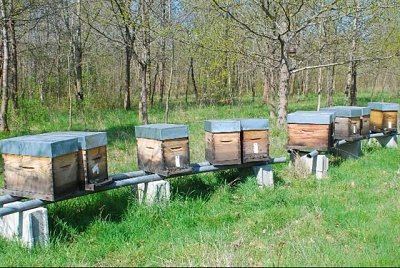 6-frame bee hives
