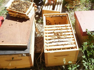 Maxi-Plus bee hives
